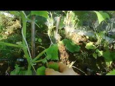 ΑΓΓΟΎΡΙΑ. ΠΑΡΑΚΛΆΔΙΑ. ΚΛΆΔΕΜΑ. - YouTube Aquarium, Gardening, Youtube, Plants, Goldfish Bowl, Aquarium Fish Tank, Lawn And Garden, Plant, Aquarius