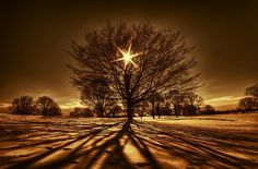 """Photo by George Saad titled """"Tree Of Light""""  """"The shot was taken at a golf course in Dayton Ohio, it was perhaps the coldest day that I have ever went out shooting in. It was an early January day and we had about 10 inches of snow falling overnight. I remembered my hands freezing even with gloves on, the sun was brightly shining but the wind was strong and made it feel way below zero. I used a Nikon D60 and a Sigma 10-20mm at F/16. A major snow storm and my passion for photography inspired…"""