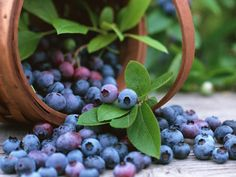 How to grow Blueberries and other fruits & veggies.