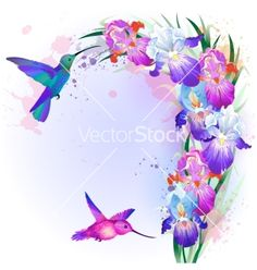 Card with iris flowers and hummingbird vector 2021704 - by Alchena on VectorStock®