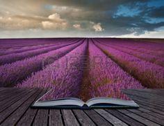 Boek met lavendel