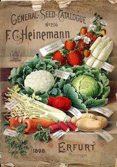 aleyma: F.C. Heinemann, General Seed Catalogue no.206, 1898 (source).