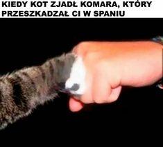 Wtf Funny, Funny Memes, Polish Memes, Best Memes, Fun Facts, Haha, I Am Awesome, Humor, Marvel