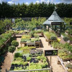 Best Garden Design For Privacy Eco Garden, Garden Cafe, Garden Shop, Summer Garden, Succulents Garden, Garden Nursery, Plant Nursery, Burford Garden Company, Garden Center Displays