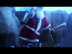A Very Penguin Christmas - The Real Wild Animals of New Orleans - YouTube