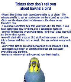 ♥ Pet Bird Stuff ♥ Things they don't tell you about having a bird. Cockatiel Care, Parakeet Care, Budgie Parakeet, Parakeets, Baby Budgies, Blue Budgie, Blue Parakeet, Parrot Toys, Parrot Bird