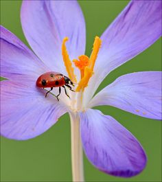 Garden Candles, Still Life Photos, Black Spot, Cool Photos, Interesting Photos, Lady In Red, Animals And Pets, Creatures, Insects