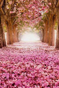 bellissimo tappeto rosa