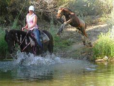 Training to be in the Olympics . (Fells pony/Gypsy cross, owned by Jennifer Rose) Baby Horses, Horses And Dogs, Animals And Pets, Funny Animals, Cute Animals, Horse Photos, Horse Pictures, Most Beautiful Animals, Beautiful Horses