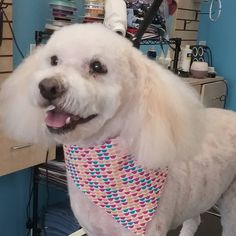Thomas #tucsondoggrooming #wagsmytail #doggroomer A well groomed dog is a well loved dog! Call us today to schedule your dog grooming appointment 520-744-7040