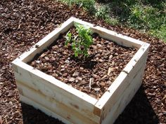"""Steve's Square Foot Garden has some of our beds in it. He's decided to plant blueberries in them.  """" I ordered the raised beds from Naturalyards (http://naturalyards.com/raisedbeds/)  I got lazy and bought them instead of building them from scratch.  Very sturdy and simple to put together.""""  Glad we could help!  See more of Steve's garden over at:  http://libtech.typepad.com/stevesquarefoot/"""