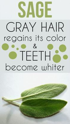 Sage – gray hair regains its color and teeth become whiter. Discover beauty recipes behind this plant Sage – gray hair regains its color and teeth become whiter. Discover beauty recipes behind this plant Natural Health Remedies, Natural Cures, Herbal Remedies, Natural Beauty, Holistic Remedies, Natural Hair, Natural Treatments, Natural Healing, Natural Medicine