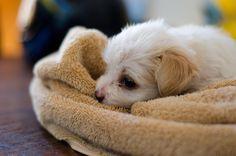 Puppy (3)    http://www.reddit.com/r/aww