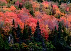 Explosion de couleurs pourpres dans les feuilles des arbres à l'automne - photo © Patrick Desgroux