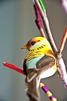Pretty colorful little bird.