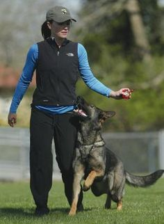 schutzhund german shepherd - beautiful attention to person