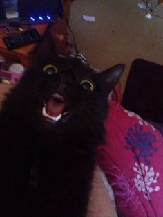 """""""OH DEAR GOD WHO IS THAT."""" 