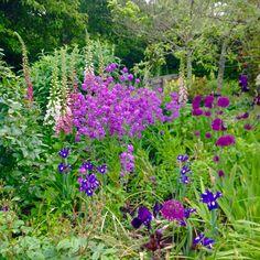 RHS Rosemoor - end of May