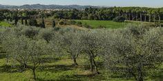 """Firenze - Mensola, Amato (alternativa libera): """"bene la messa in sicurezza, ma necessario rivedere il progetto"""""""