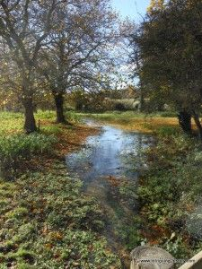 1000 images about river itchen hampshire on pinterest for Best trout fishing in new hampshire