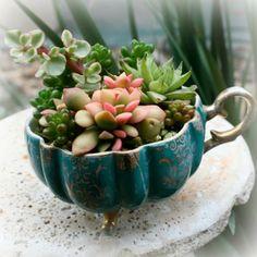 Jardins em Xícaras de Chá - Tea Cup Gardens