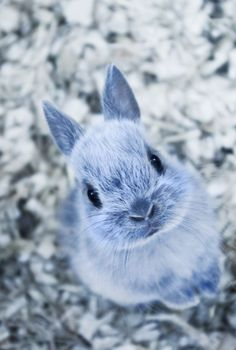 50 Cute Bunny Pictures - AWW - - This is my new favorite webpage. I should bookmark it and never close it. The post 50 Cute Bunny Pictures appeared first on Gag Dad. Cute Bunny Pictures, Animal Pictures, Cute Baby Bunnies, Cute Babies, Snow Bunnies, Adorable Bunnies, Animals And Pets, Funny Animals, Cute Little Animals