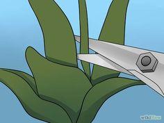 Poda de orquídeas