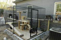 patio para gatos 6