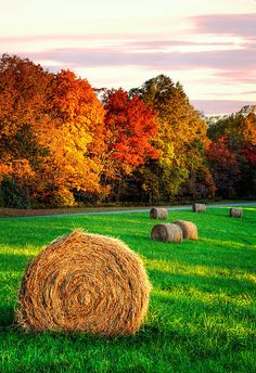 Blue Ridge - Fall Colors Autumn Colorful Trees and Hay Bales