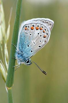 Nature butterfly photos, 30 the most beautiful butterflies