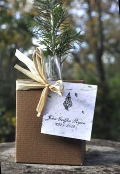 Plant a Memorial Tree Seedling In Box