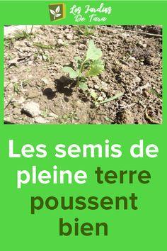 Les semis de pleine terre poussent bien