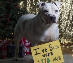 After nearly 4 years, homeless shelter dog critically in need of help • Pet Rescue Report