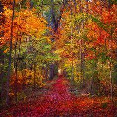 chrysti's photo on Instagram - autumnal wonderland - gettysburg, pa