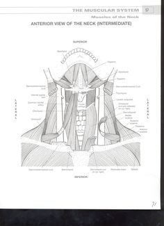 Anatomy Coloring Book Chapter 11 Welcome To Netter Images Axial