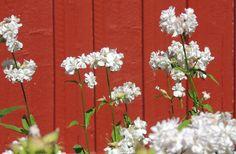 Ilvesmäen Rouva: Elämän värit Lady, Plants, Plant, Planets