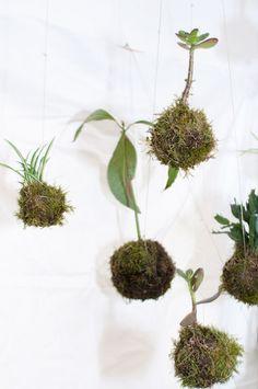 kokedama - stringgarden Plants, Plant, Planets