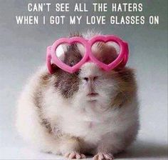 Can't see all the haters when I got my love glasses on. Wish I was able to wear my love glasses more often! Funny Animal Pictures, Funny Animals, Cute Animals, Squirrel Pictures, Hello Friday, Happy Friday, Happy Weekend, Funny Cute, The Funny