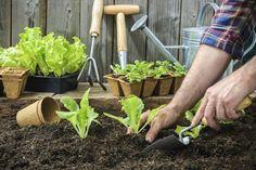 Nada como uma boa planificação para exibir permanentemente um jardim florido e uma horta cuidada. Veja as espécies botânicas e hortícolas que deve semear em cada um dos meses