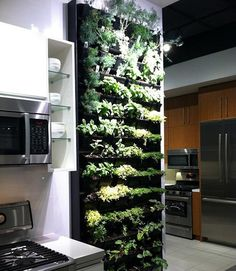 Living wall. Indoor herb garden for your kitchen. Life as art.  This would be awesome!
