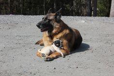 Este muy feliz cachorro pug que está disfrutando una bonita tarde en los brazos de su mejor amigo. | 24 cachorros pug que deberían ser ilegales