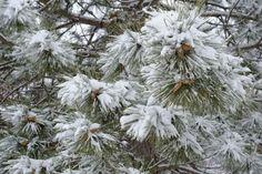 How to make home-made Christmas tree flocking | eHow UK