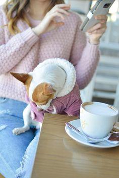 Little Bellis Dog Pup / Purple Winter Coat by Tamara Bellis Shiny Honey Fashion and Lifestyle Blog