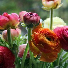 favorite flower #color