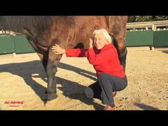 Solving Horse Problems with Tellington TTouch - YouTube