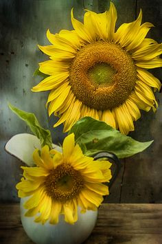 Sunflower Series II Photograph by Kathy Jennings - Sunflower Series II Fine Art Prints and Posters for Sale°°
