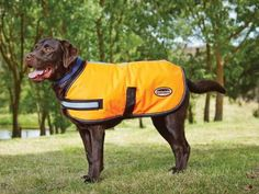 DOGGIES TOO!! WeatherBeeta Reflective Parka 300D Dog Coat and other styles available. Dogs are always welcomed to come in and fit their coat! #weatherbeeta #canine #dogcoat