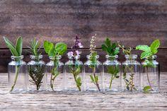 10 Kräuter, die du im Wasser aufziehen kannst und die ein ganzes Jahr lang im Haus blühen