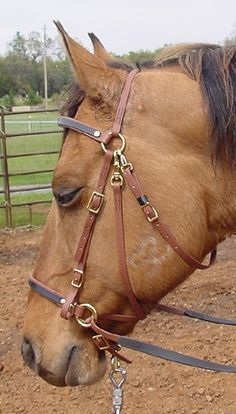 Freedom Bridle - Moss Rock Endurance - Your Source for Custom Biothane Competitive Tack