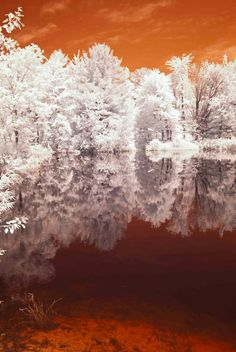 Fine Art Photography - Trees Forest Infrared White - 11 x photograph Infrared Photography, Tree Photography, Fine Art Photography, Cool Photos, Beautiful Pictures, Looks Black, Colored Highlights, Tree Art, Landscape Photos